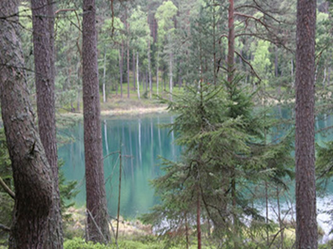 Jezioro lobeliowe Kocioł