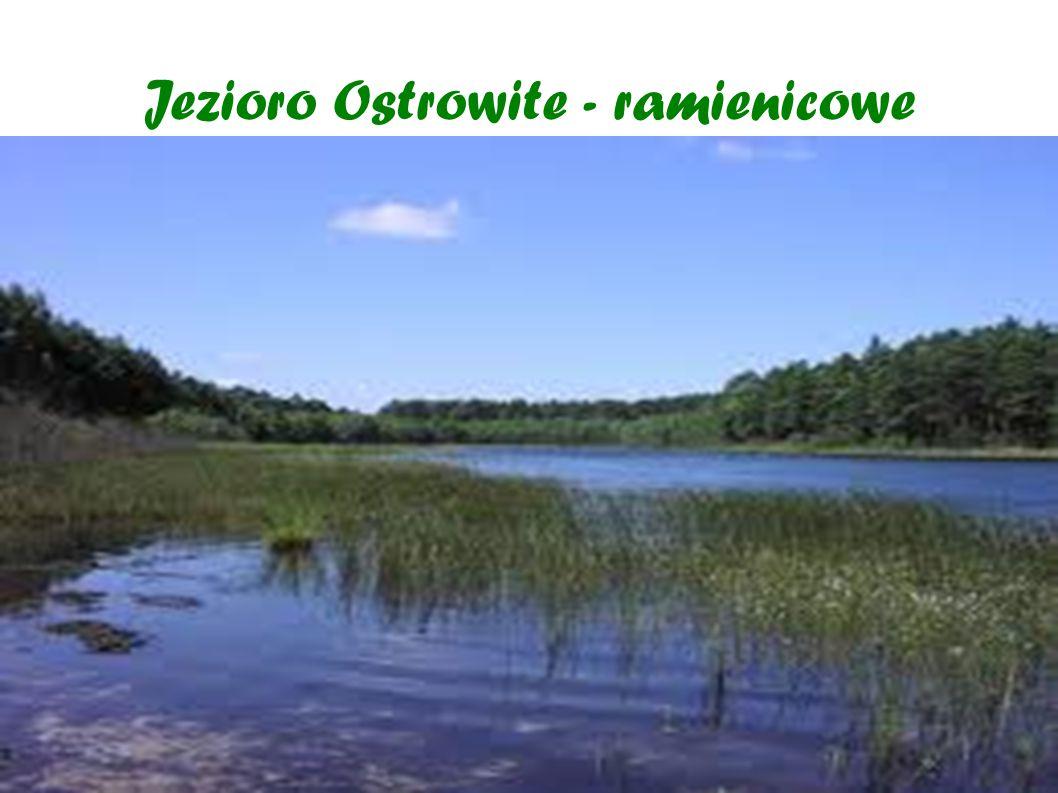 Jezioro Ostrowite - ramienicowe