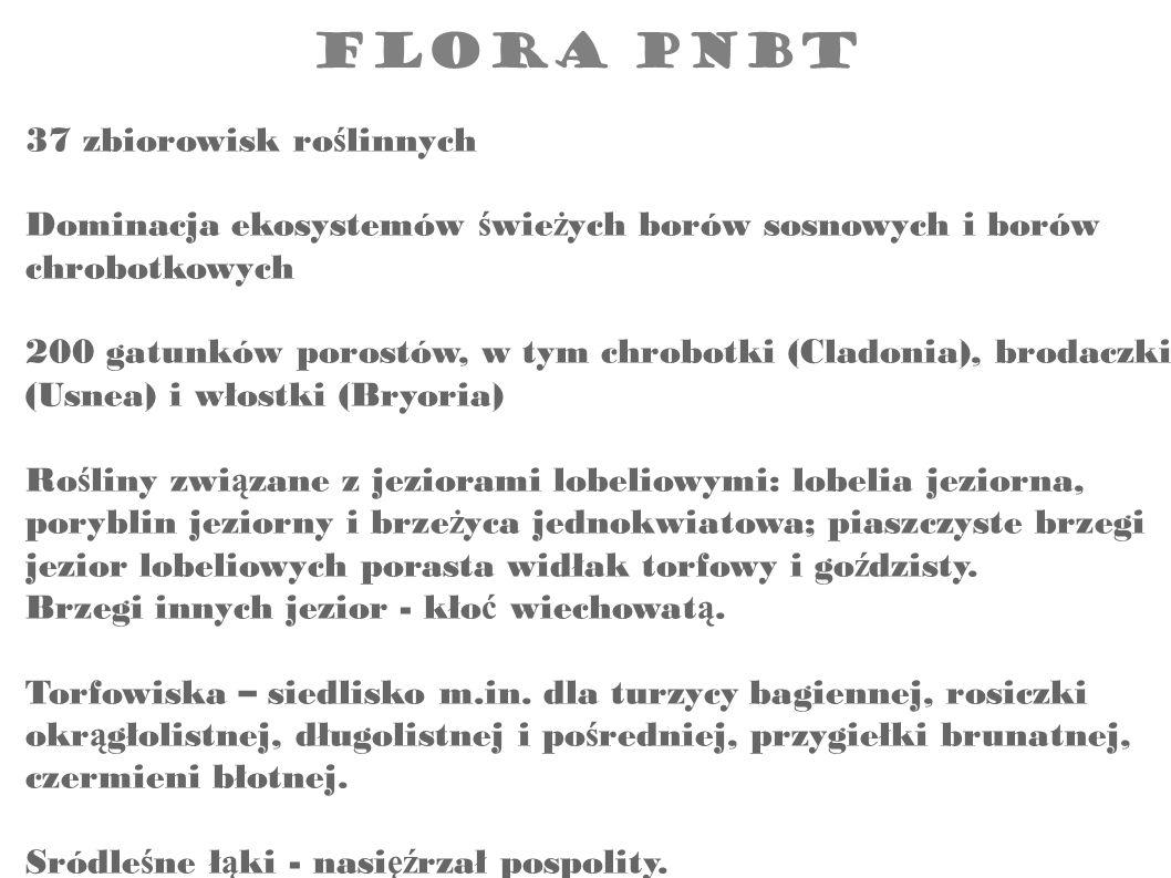 37 zbiorowisk roślinnych Dominacja ekosystemów świeżych borów sosnowych i borów chrobotkowych 200 gatunków porostów, w tym chrobotki (Cladonia), brodaczki (Usnea) i włostki (Bryoria) Rośliny związane z jeziorami lobeliowymi: lobelia jeziorna, poryblin jeziorny i brzeżyca jednokwiatowa; piaszczyste brzegi jezior lobeliowych porasta widłak torfowy i goździsty. Brzegi innych jezior - kłoć wiechowatą. Torfowiska – siedlisko m.in. dla turzycy bagiennej, rosiczki okrągłolistnej, długolistnej i pośredniej, przygiełki brunatnej, czermieni błotnej. Sródleśne łąki - nasięźrzał pospolity.