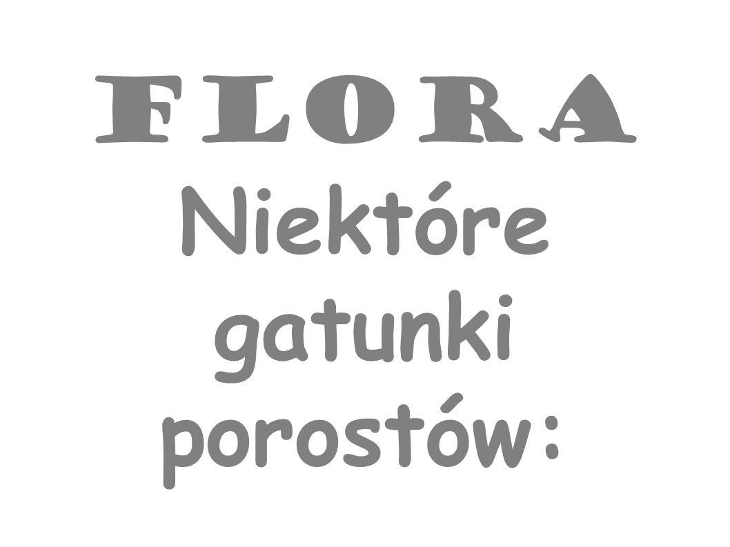 Flora Niektóre gatunki porostów: