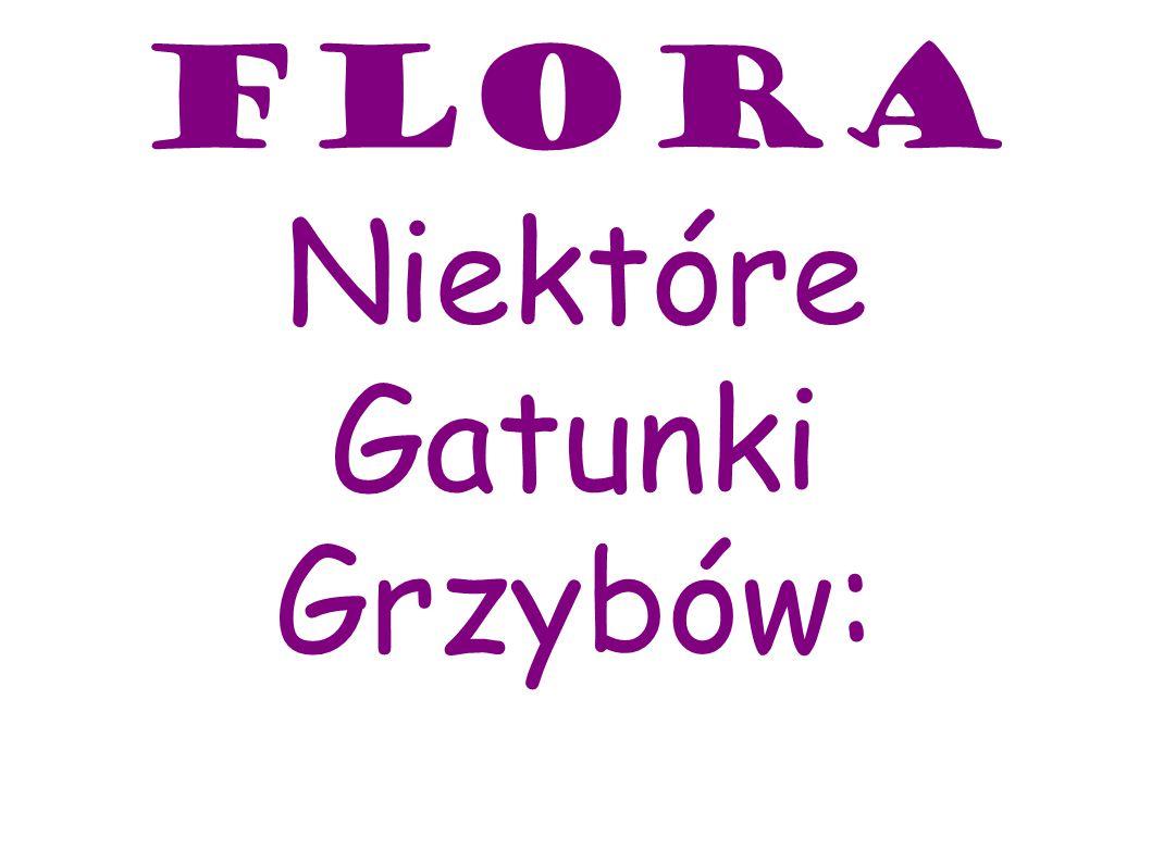 Flora Niektóre Gatunki Grzybów: