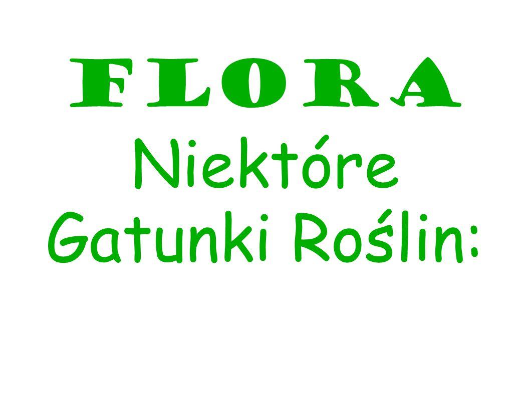 Flora Niektóre Gatunki Roślin: