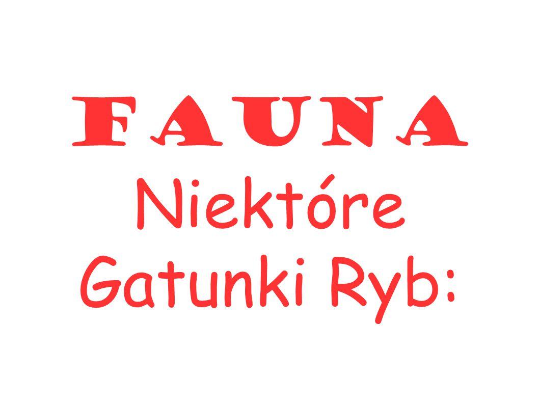 Fauna Niektóre Gatunki Ryb: