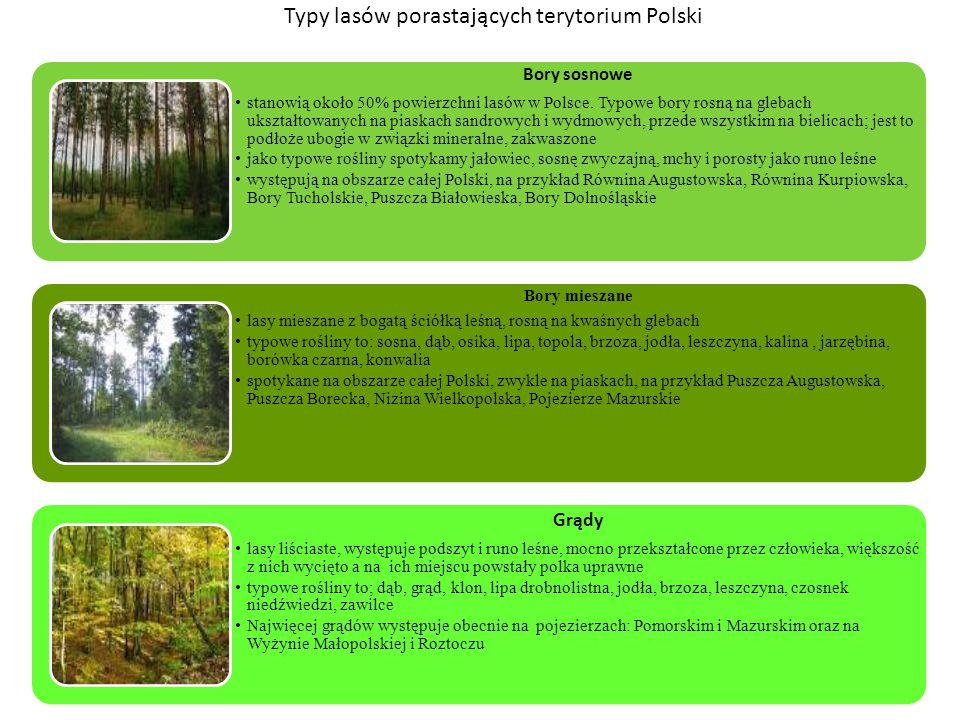 Typy lasów porastających terytorium Polski