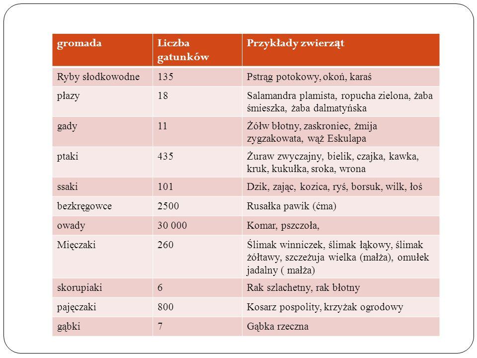 gromada Liczba gatunków Przykłady zwierząt Ryby słodkowodne 135