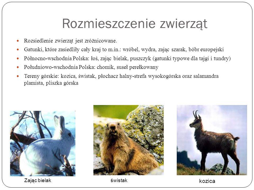 Rozmieszczenie zwierząt
