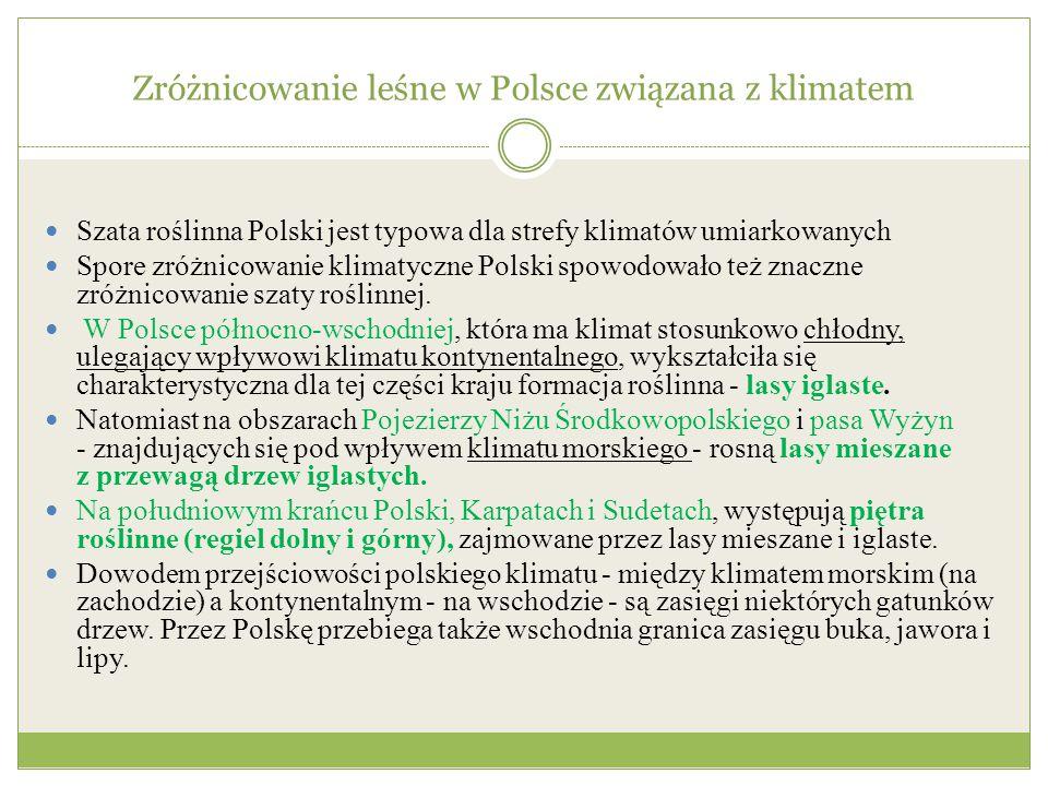 Zróżnicowanie leśne w Polsce związana z klimatem