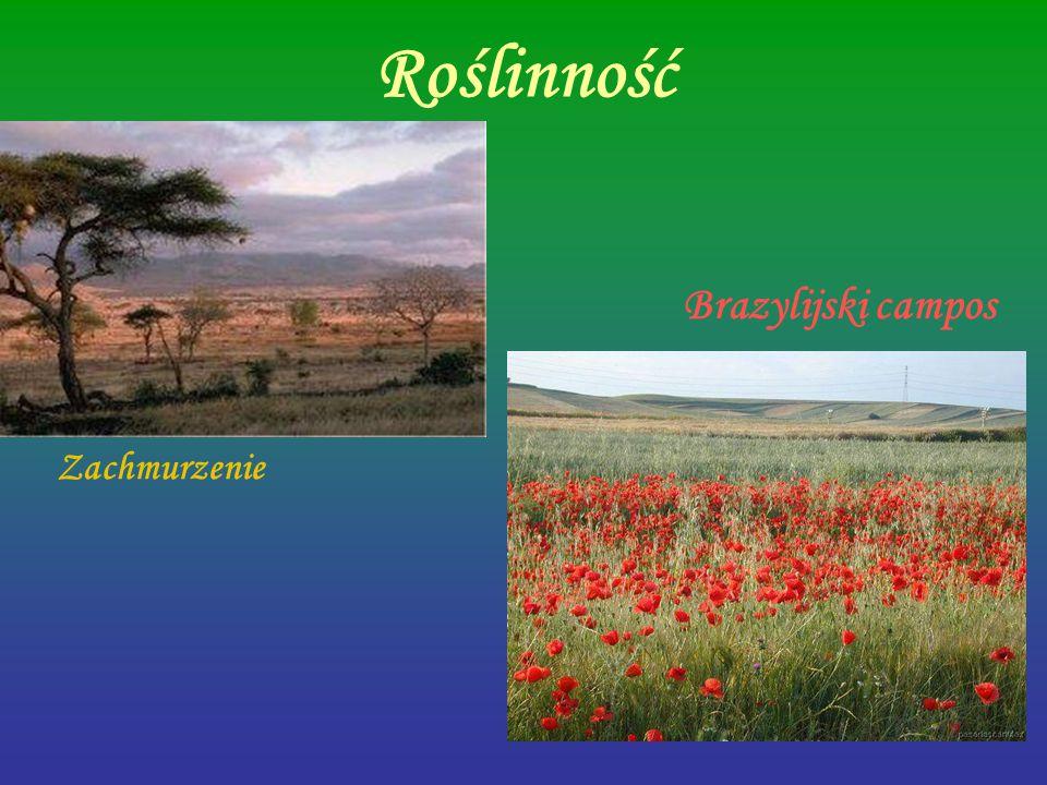 Roślinność Brazylijski campos Zachmurzenie