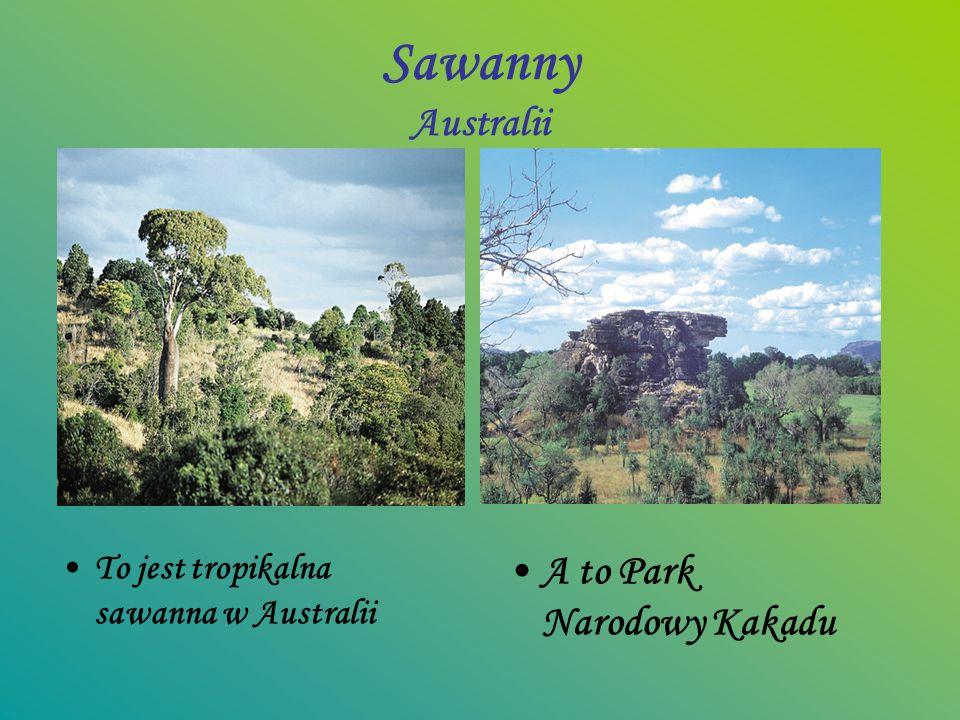 Sawanny Australii A to Park Narodowy Kakadu