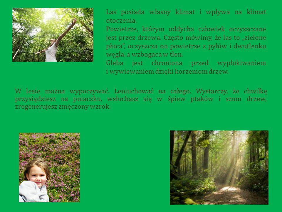 Las posiada własny klimat i wpływa na klimat otoczenia.