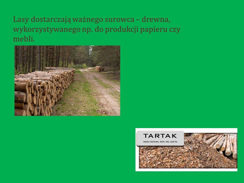 Lasy dostarczają ważnego surowca – drewna, wykorzystywanego np