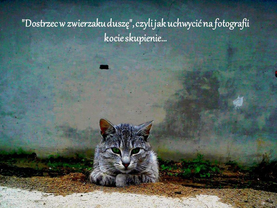 Dostrzec w zwierzaku duszę , czyli jak uchwycić na fotografii kocie skupienie…
