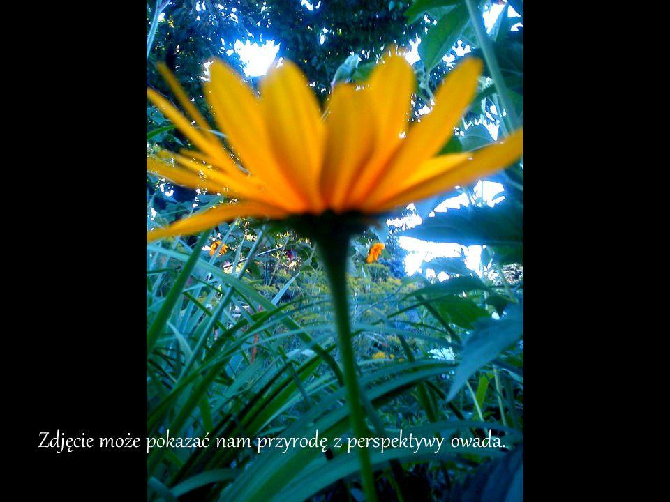 Zdjęcie może pokazać nam przyrodę z perspektywy owada.