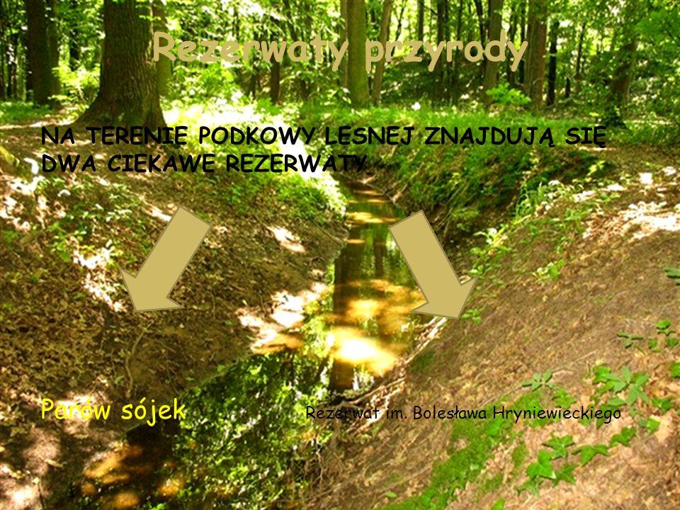 Rezerwaty przyrody Parów sójek Rezerwat im. Bolesława Hryniewieckiego