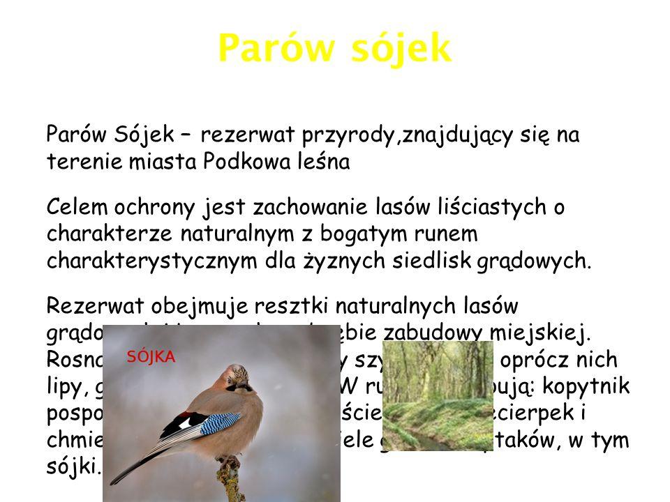Parów sójek Parów Sójek – rezerwat przyrody,znajdujący się na terenie miasta Podkowa leśna.