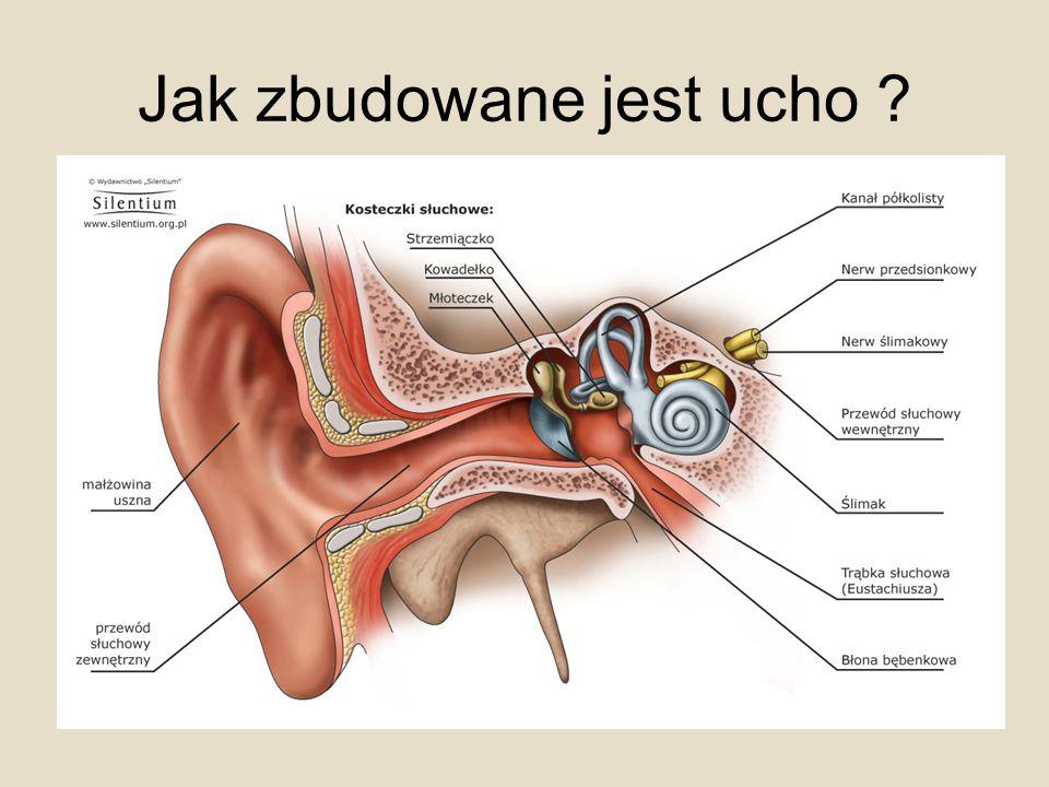 Jak zbudowane jest ucho