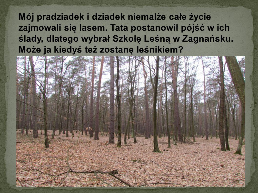 Mój pradziadek i dziadek niemalże całe życie zajmowali się lasem