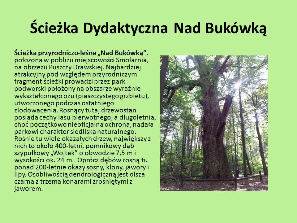 Ścieżka Dydaktyczna Nad Bukówką