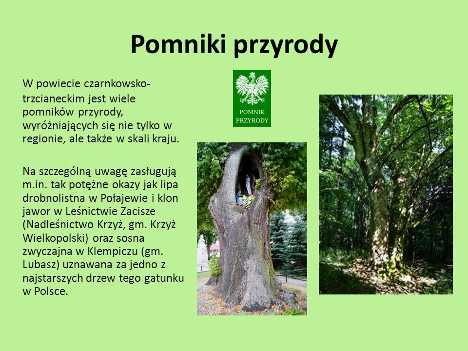 Pomniki przyrody W powiecie czarnkowsko-trzcianeckim jest wiele pomników przyrody, wyróżniających się nie tylko w regionie, ale także w skali kraju.
