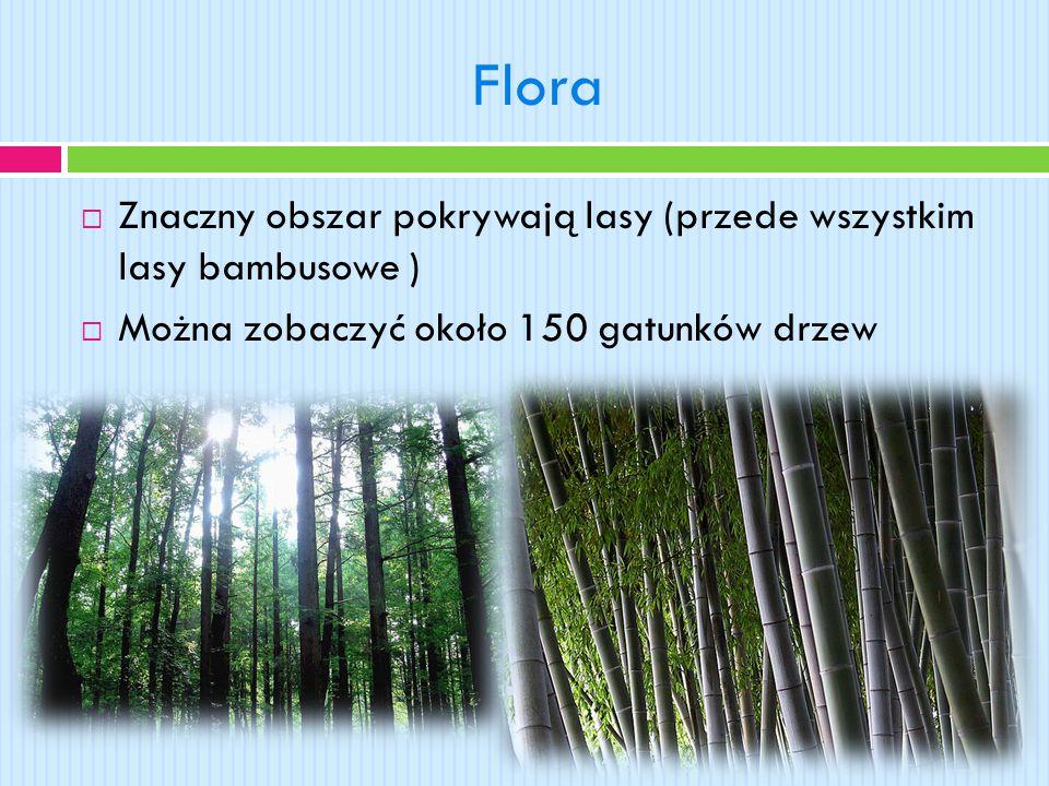 Flora Znaczny obszar pokrywają lasy (przede wszystkim lasy bambusowe )