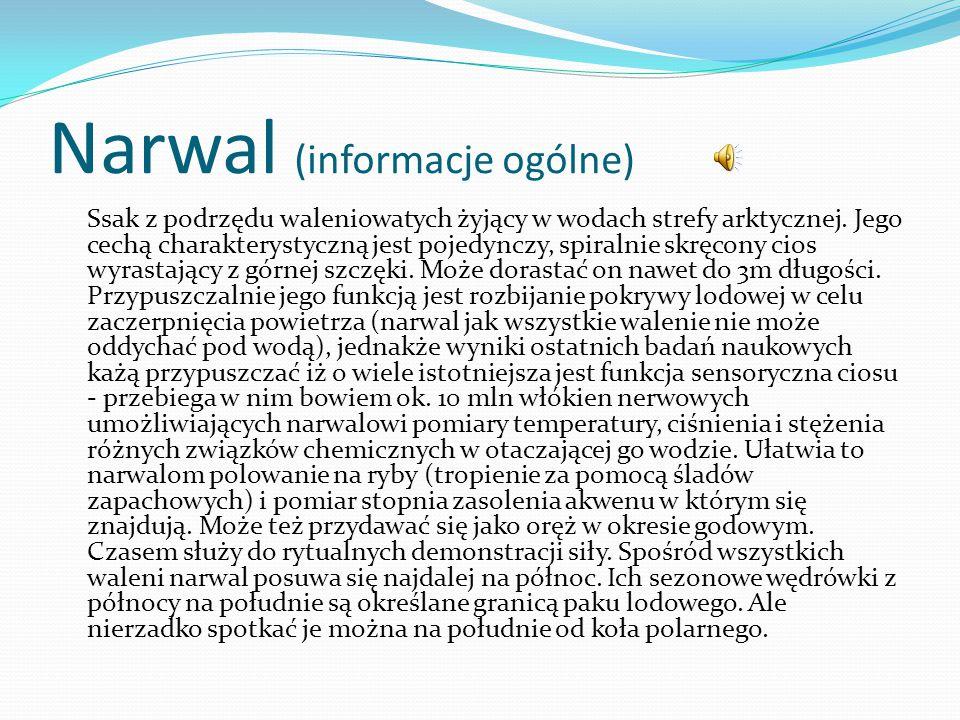 Narwal (informacje ogólne)