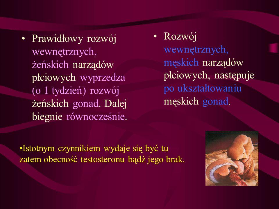 Rozwój wewnętrznych, męskich narządów płciowych, następuje po ukształtowaniu męskich gonad.