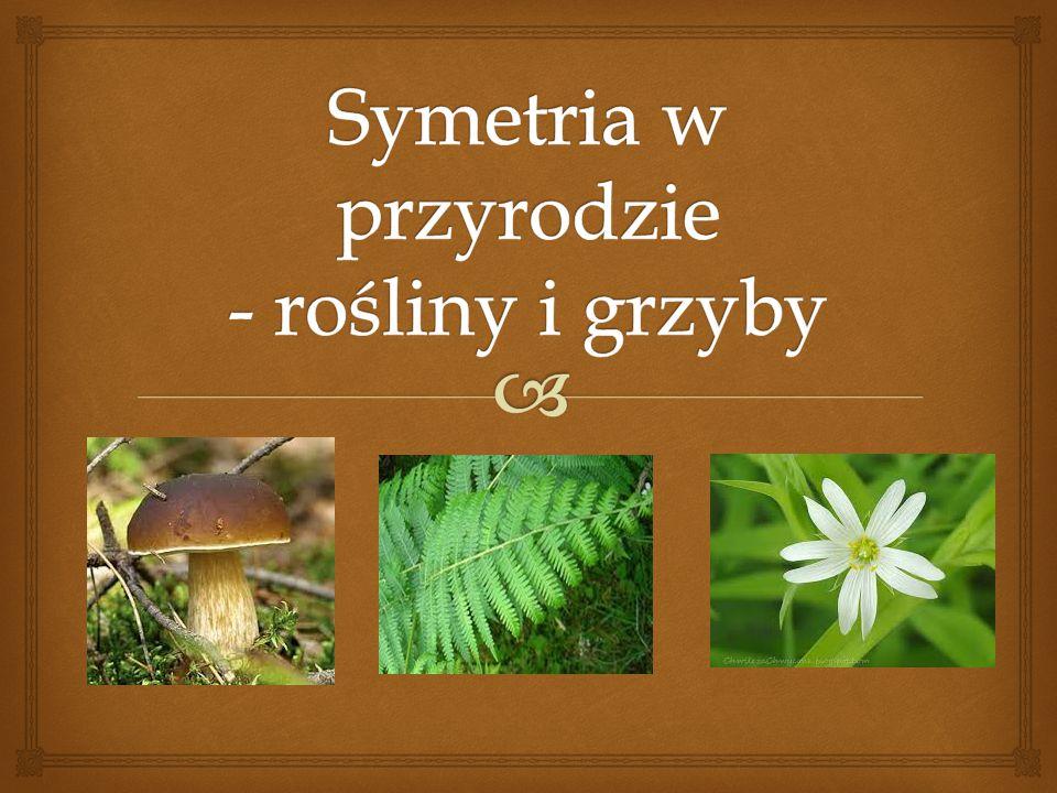 Symetria w przyrodzie - rośliny i grzyby
