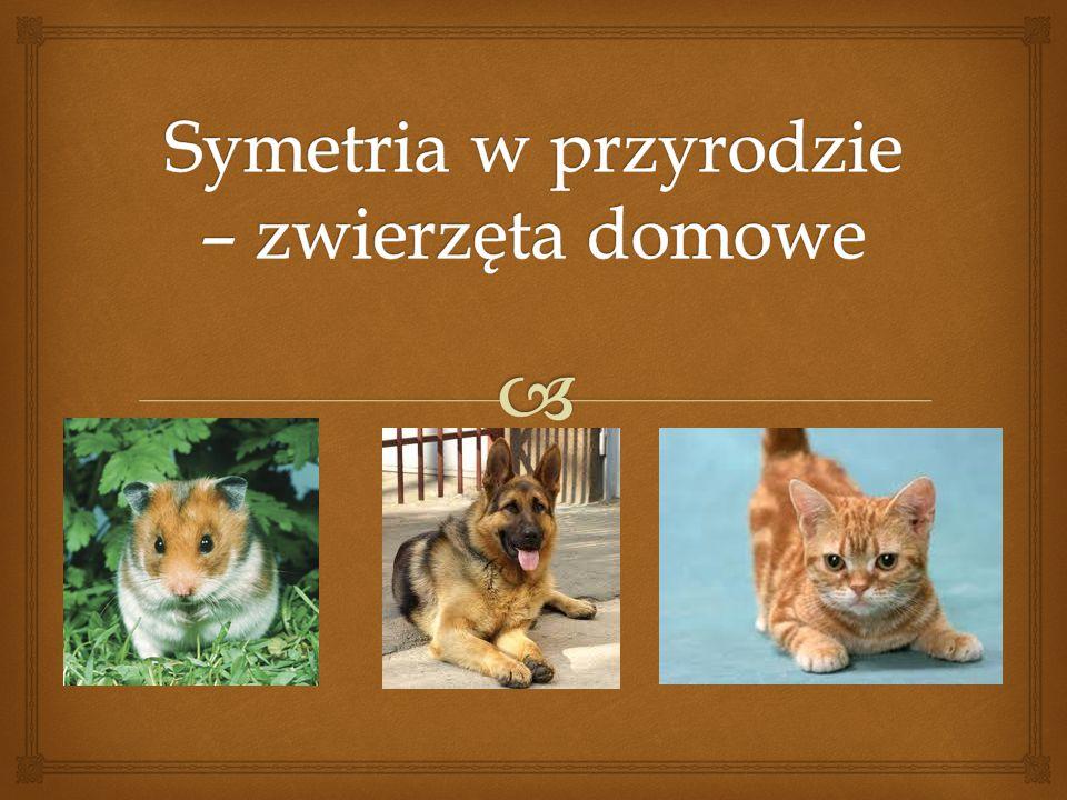 Symetria w przyrodzie – zwierzęta domowe