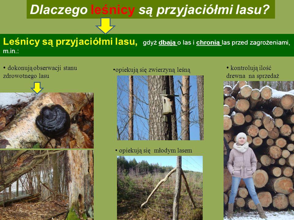 Dlaczego leśnicy są przyjaciółmi lasu