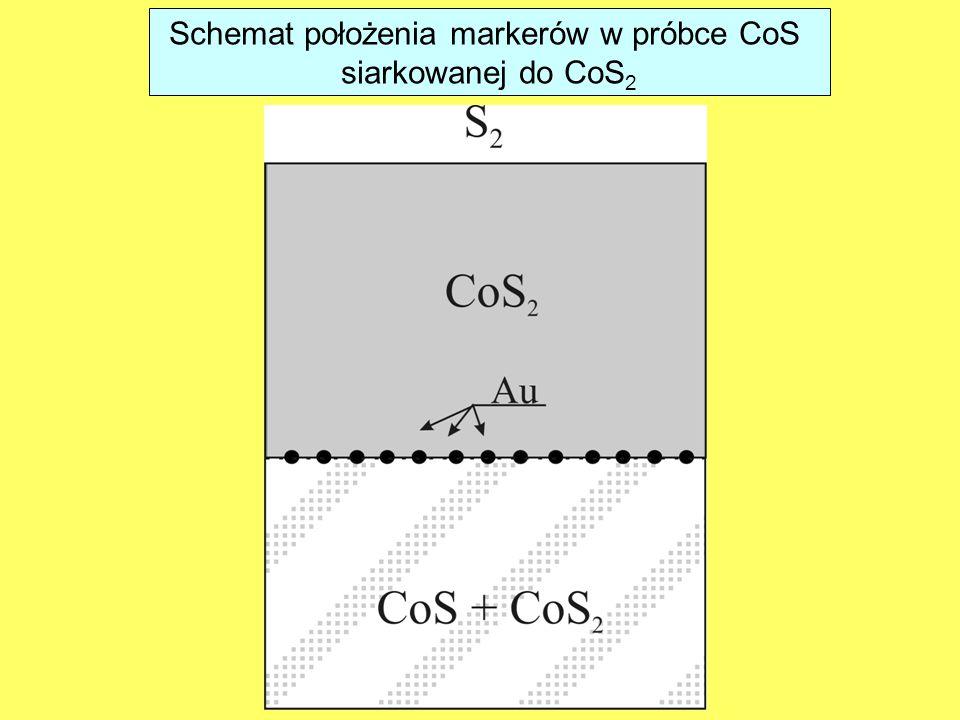 Schemat położenia markerów w próbce CoS