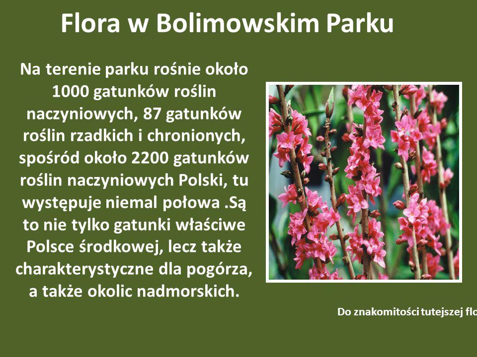 Flora w Bolimowskim Parku