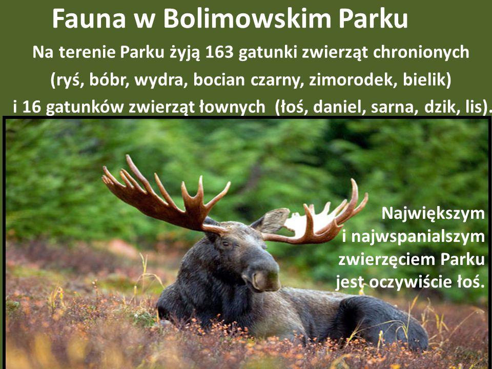 Fauna w Bolimowskim Parku