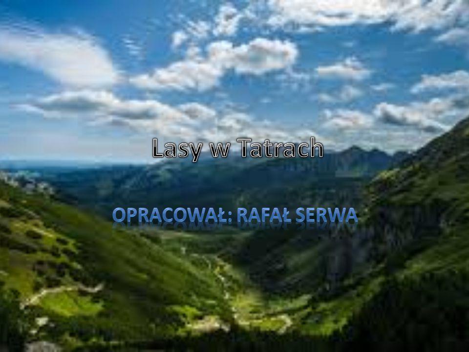 Opracował: Rafał Serwa