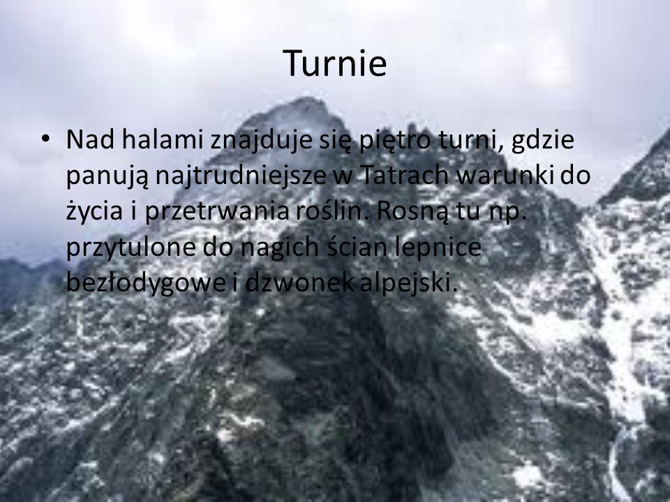 Turnie
