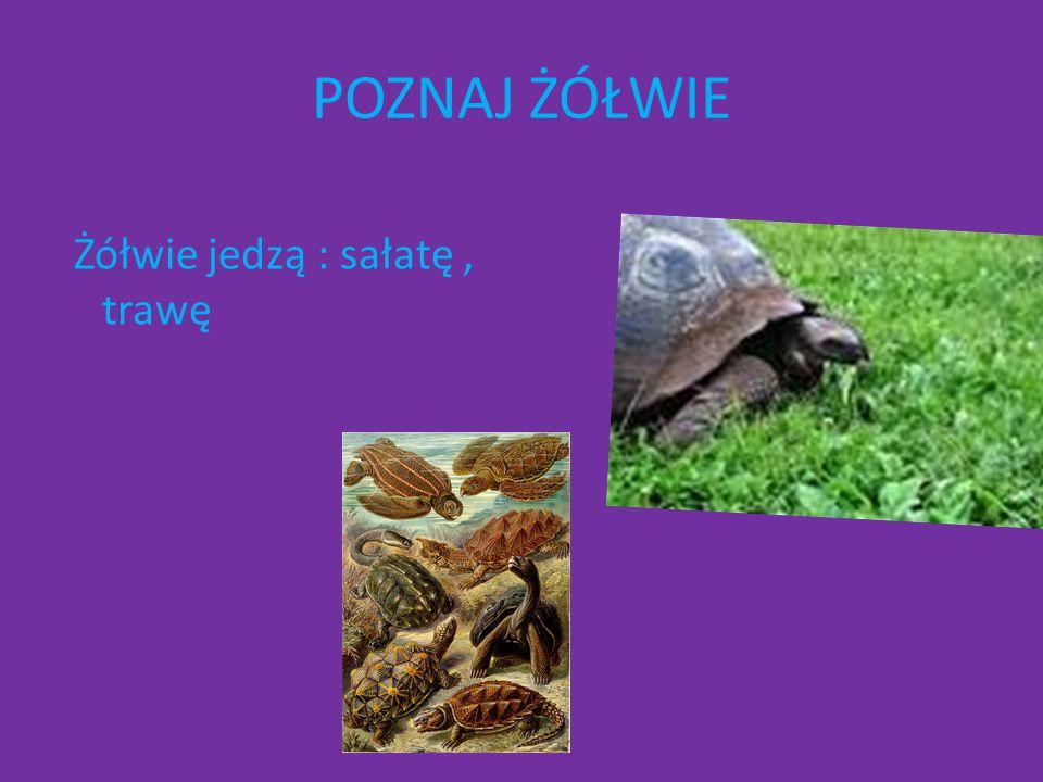 POZNAJ ŻÓŁWIE Żółwie jedzą : sałatę , trawę