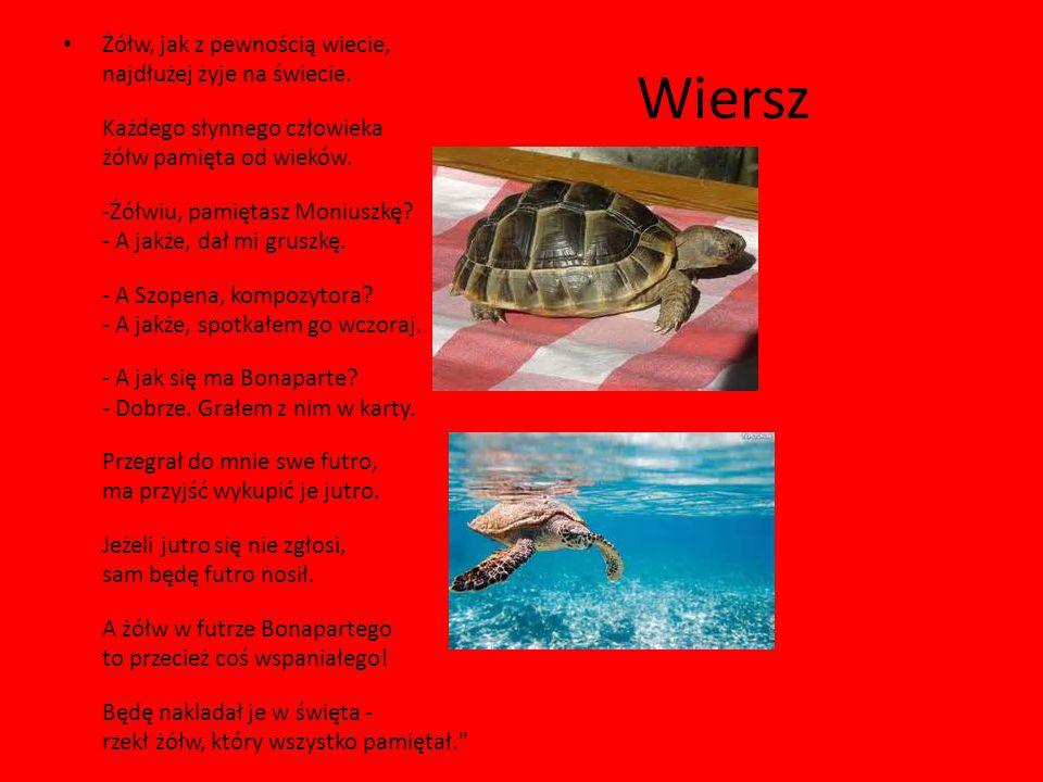 Żółw, jak z pewnością wiecie, najdłużej żyje na świecie