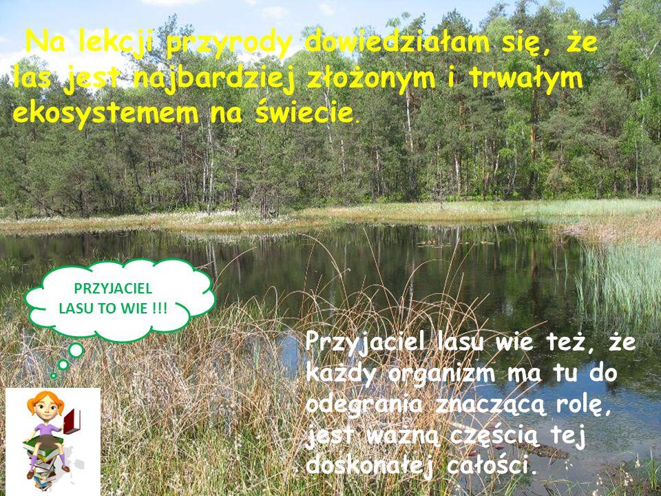 Na lekcji przyrody dowiedziałam się, że las jest najbardziej złożonym i trwałym ekosystemem na świecie.