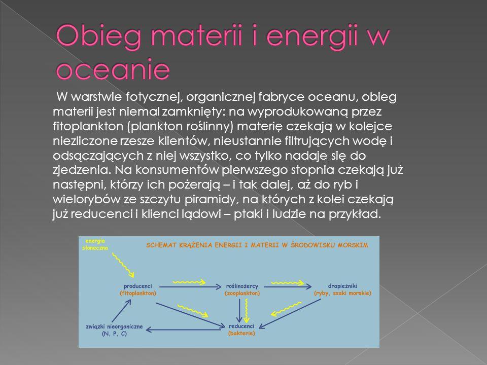 Obieg materii i energii w oceanie