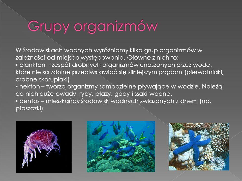 Grupy organizmów W środowiskach wodnych wyróżniamy kilka grup organizmów w zależności od miejsca występowania. Główne z nich to: