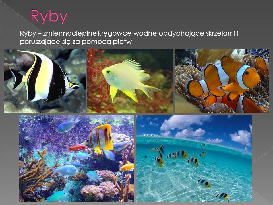 Ryby Ryby – zmiennocieplne kręgowce wodne oddychające skrzelami i poruszające się za pomocą płetw