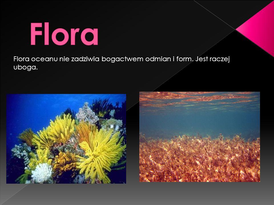 Flora Flora oceanu nie zadziwia bogactwem odmian i form. Jest raczej uboga.