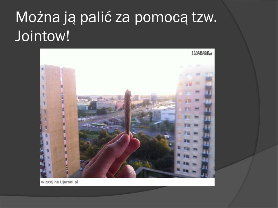 Można ją palić za pomocą tzw. Jointow!