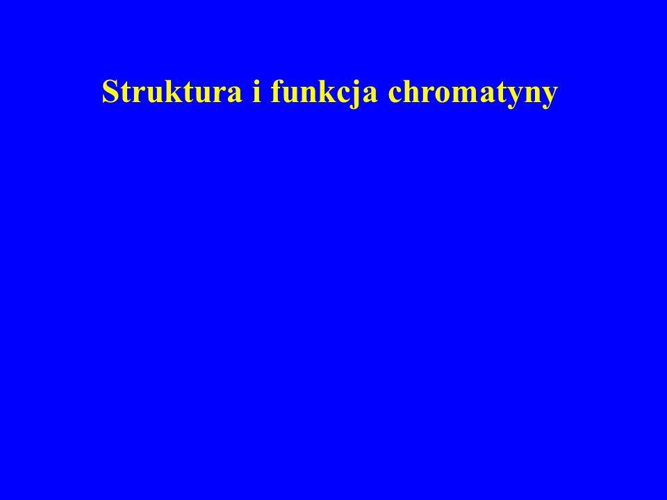 Struktura i funkcja chromatyny