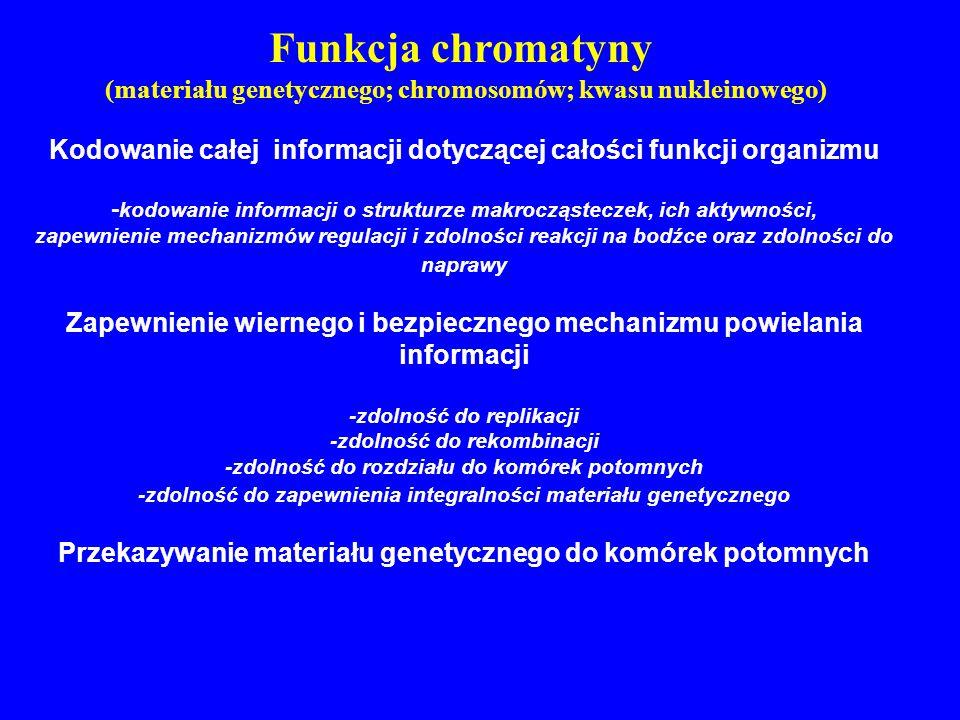 Funkcja chromatyny (materiału genetycznego; chromosomów; kwasu nukleinowego) Kodowanie całej informacji dotyczącej całości funkcji organizmu.