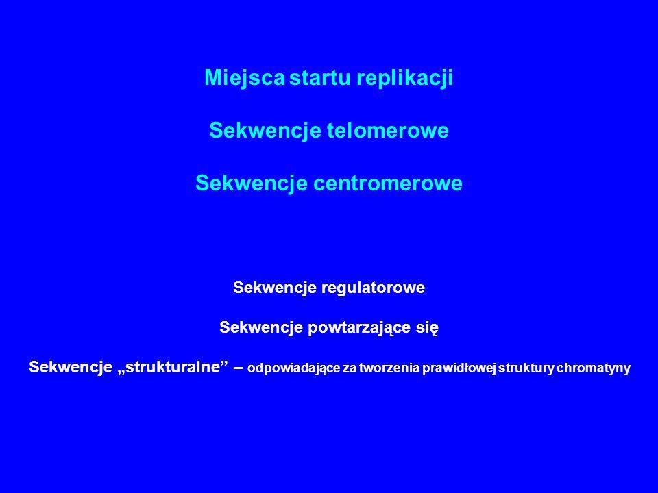Miejsca startu replikacji Sekwencje telomerowe Sekwencje centromerowe