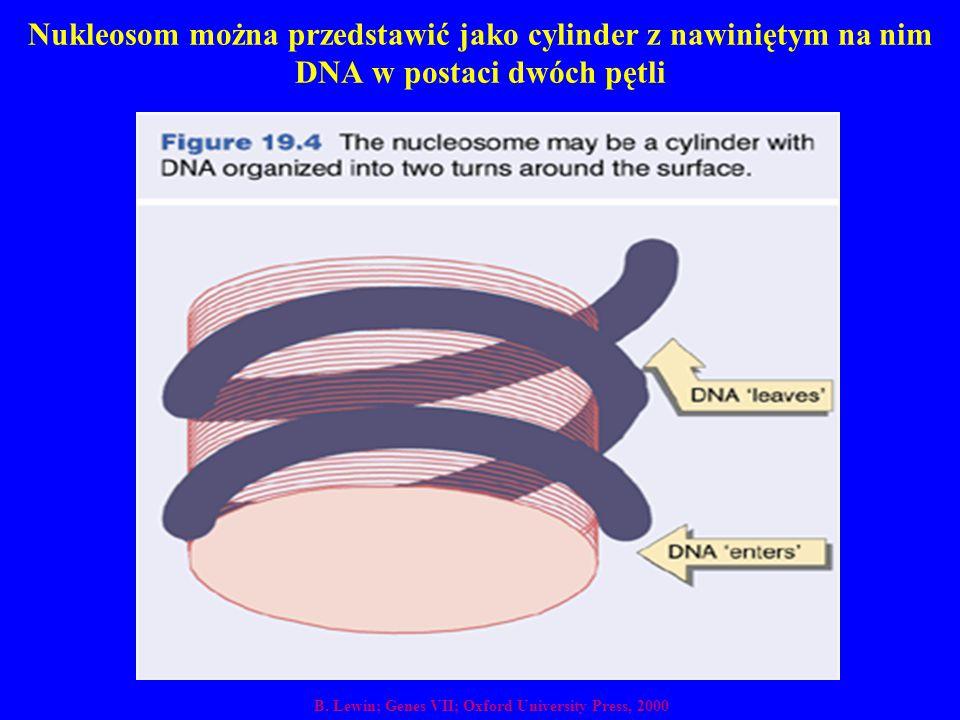 Nukleosom można przedstawić jako cylinder z nawiniętym na nim DNA w postaci dwóch pętli