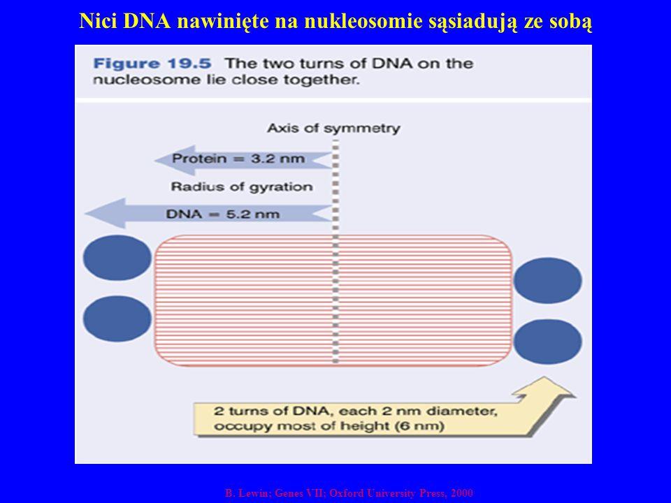 Nici DNA nawinięte na nukleosomie sąsiadują ze sobą