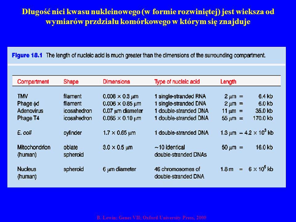 Długość nici kwasu nukleinowego (w formie rozwiniętej) jest wieksza od wymiarów przdziału komórkowego w którym się znajduje