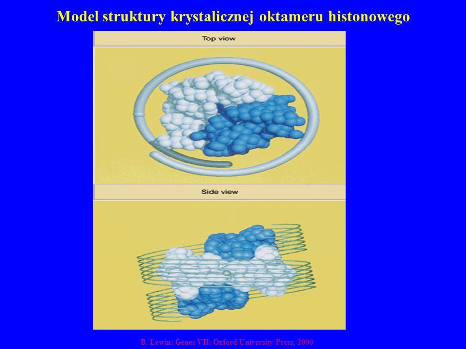 Model struktury krystalicznej oktameru histonowego