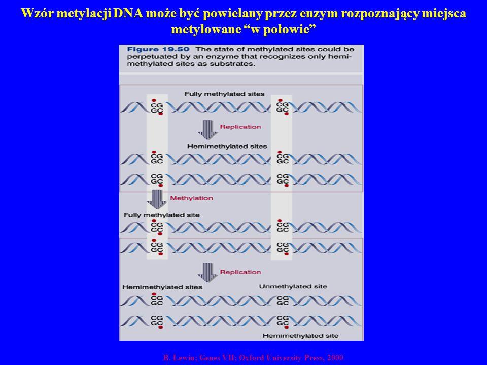 Wzór metylacji DNA może być powielany przez enzym rozpoznający miejsca metylowane w połowie